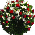 хвоя-розы